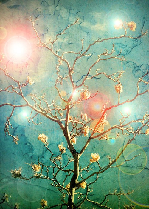Tree Greeting Card featuring the photograph The Memory Of Dreams by Tara Turner