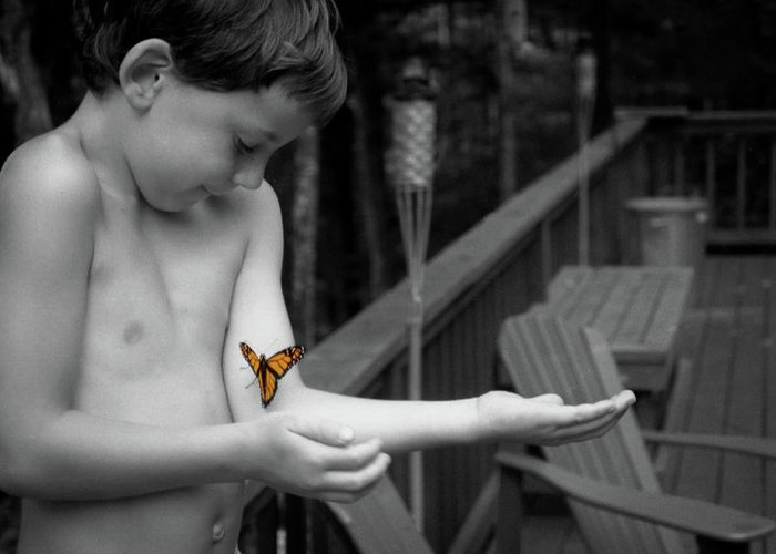 Boy Greeting Card featuring the photograph The Monarch by Wayne King