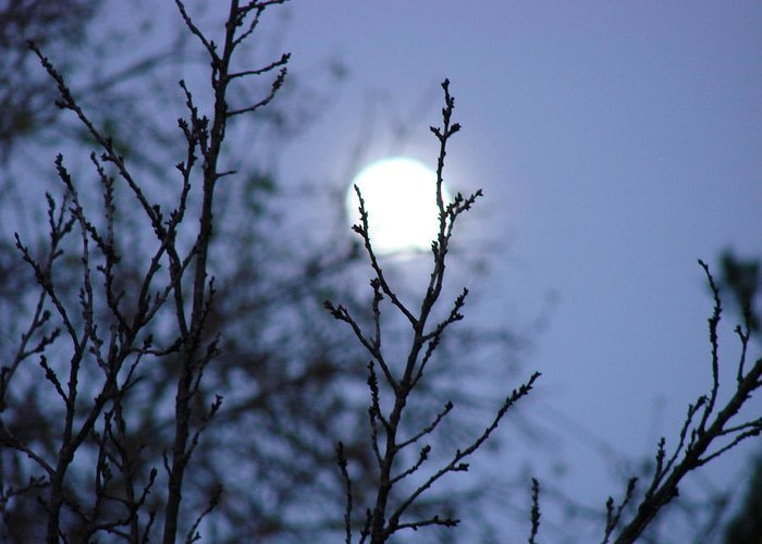 Moon Greeting Card featuring the photograph The Moon by Liz Vernand