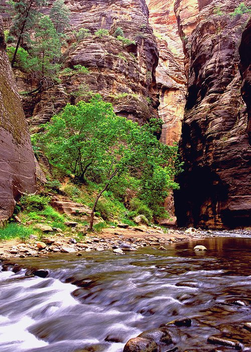Zion National Park Greeting Card featuring the photograph The Narrows Zion by Alan Lenk