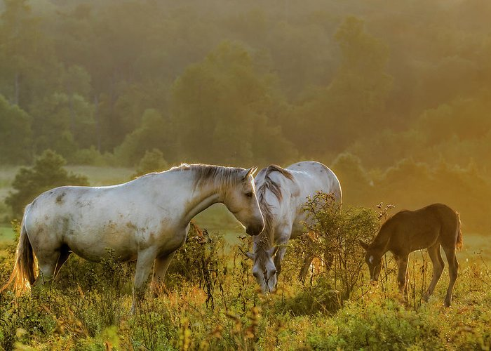 Horse Greeting Card featuring the photograph The Next Generation by Ron McGinnis