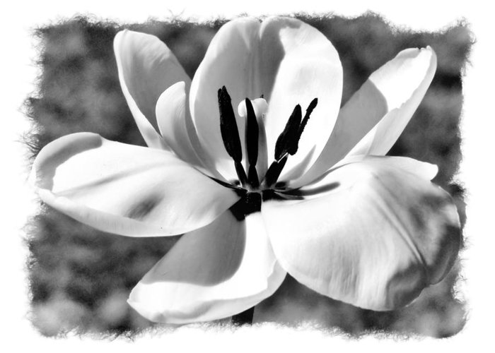 Black And White Greeting Card featuring the photograph The Notecard by Karen Scovill