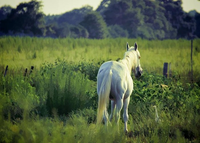 Animals Greeting Card featuring the photograph The Old Grey Mare by Jan Amiss Photography