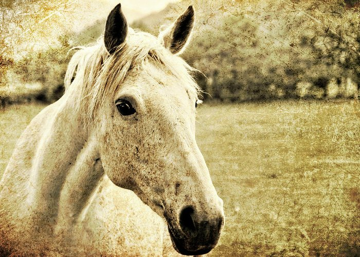 Horse Greeting Card featuring the photograph The Old Grey Mare by Meirion Matthias