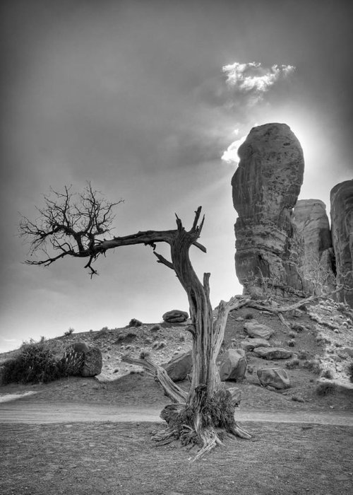 America Greeting Card featuring the photograph The Old Tree by Andreas Freund