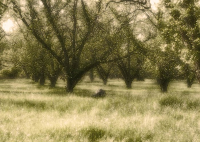 Landscape Greeting Card featuring the photograph The Orchard by Ayesha Lakes
