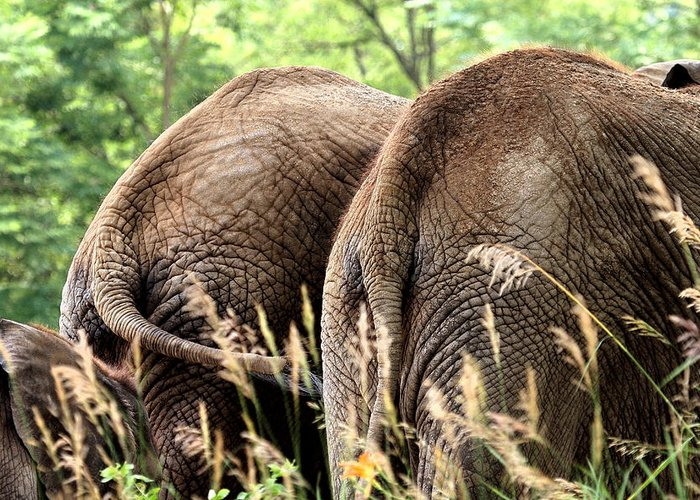 African Elephant Greeting Card featuring the photograph The Other Side by Angela Rath