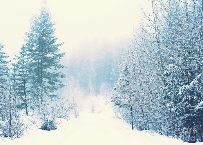 Winter Greeting Card featuring the photograph The Pale Kiss Of Winter by Tara Turner