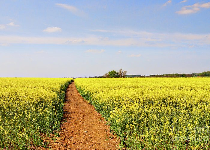 Canola Greeting Card featuring the photograph The Path To Bosworth Field by John Edwards