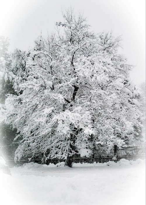 Tree Greeting Card featuring the photograph The Pear Tree by Heather Hubbard
