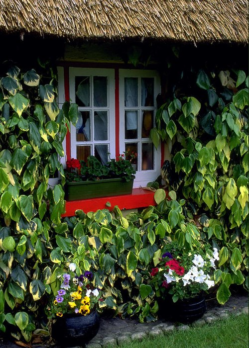 Ivy Greeting Card featuring the photograph The Perfect Cottage by Carl Purcell