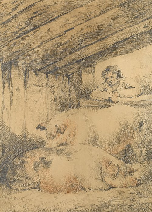 Drawing Of Pig Greeting Cards