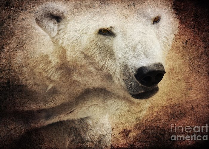 Bear Greeting Card featuring the photograph The Polar Bear by Angela Doelling AD DESIGN Photo and PhotoArt