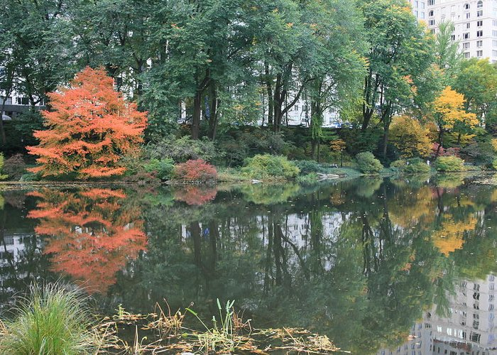 Central Park Greeting Card featuring the photograph The Pond In Central Park In Fall by Christopher Kirby