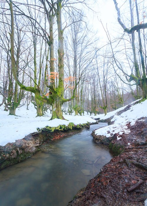 Otzarreta Greeting Card featuring the photograph The River In The Otzarreta Forest With Snow by Carlos Aragon