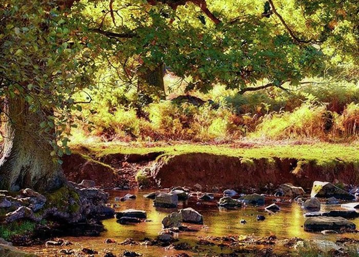 Linvalley Greeting Card featuring the photograph The River Lin , Bradgate Park by John Edwards