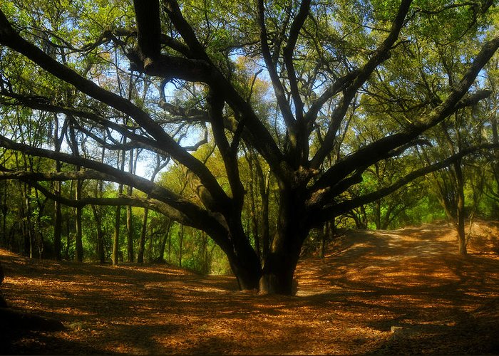 Live Oak Tree Greeting Card featuring the photograph The Sacred Oak by David Lee Thompson
