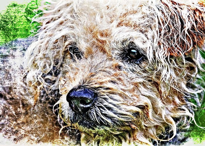 Dog Greeting Card featuring the photograph The Scruffiest Dog In The World by Meirion Matthias