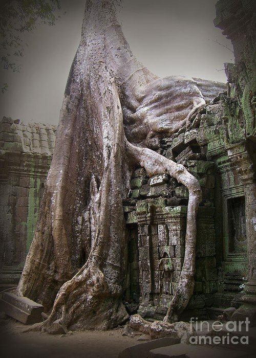 Tree Roots Greeting Card featuring the photograph The Secrets Of Angkor by Eena Bo