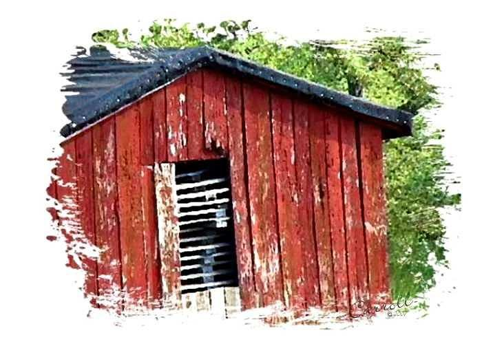 Farm Greeting Card featuring the photograph The Shack by Linda Carroll
