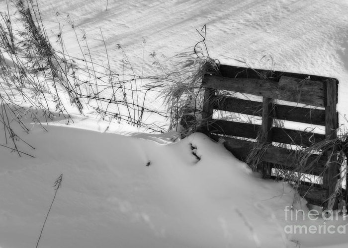 Snow Greeting Card featuring the photograph The Snow Gate by Cathy Beharriell