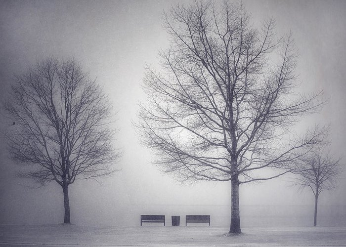 Photography Greeting Card featuring the photograph The Soft Breath Of Winter by Tara Turner