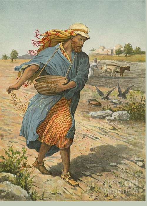 Bible; Children's; Jesus Christ; Seed; Sower; Parable Greeting Card featuring the painting The Sower Sowing The Seed by English School
