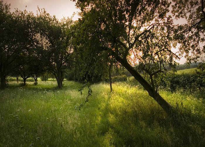 Spring Greeting Card featuring the photograph The Spring Orchard by Angel Ciesniarska