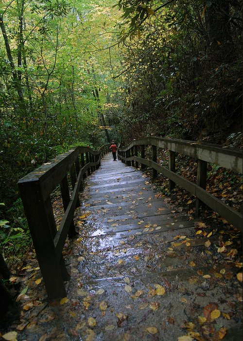 Nature Greeting Card featuring the photograph The Stairs by Greg Straub