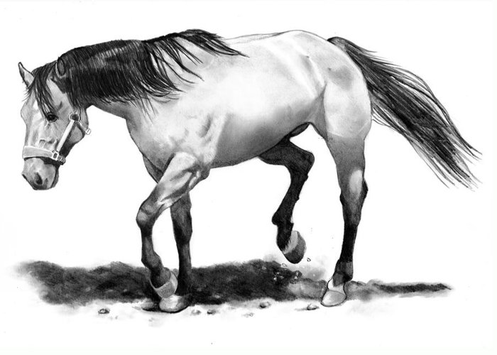 Horse Greeting Card featuring the drawing The Stallion by Joyce Geleynse