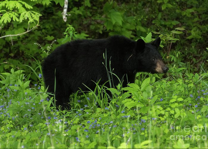 Bear Greeting Card featuring the photograph The Standoff by Jo Ann Gregg