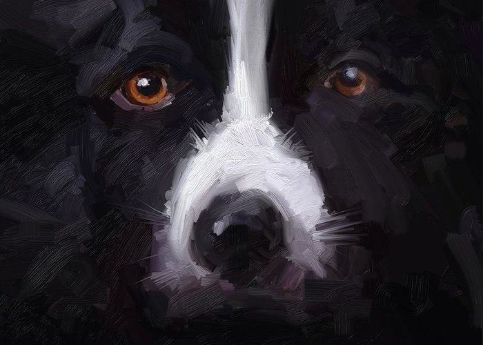 Border Collie Dog Sheepdog Stare Greeting Card featuring the digital art The Stare by Scott Waters