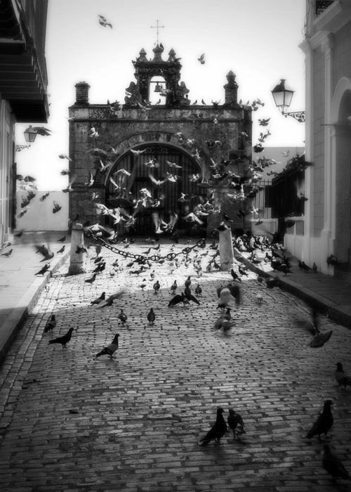 Pigeon Greeting Card featuring the photograph The Street Pigeons by Perry Webster