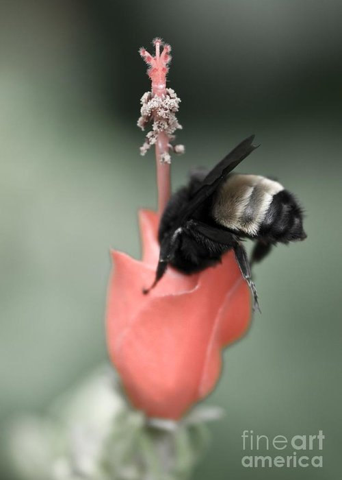 Bee Greeting Card featuring the photograph The Sweet Spot by Charles Dobbs