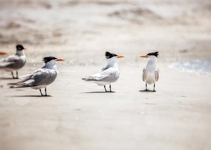 Tern Greeting Card featuring the photograph The Talking Terns by Lisa Russo
