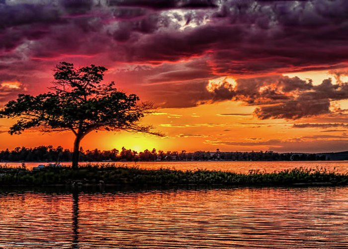 Sunset Greeting Card featuring the photograph The Tree by Joe Holley