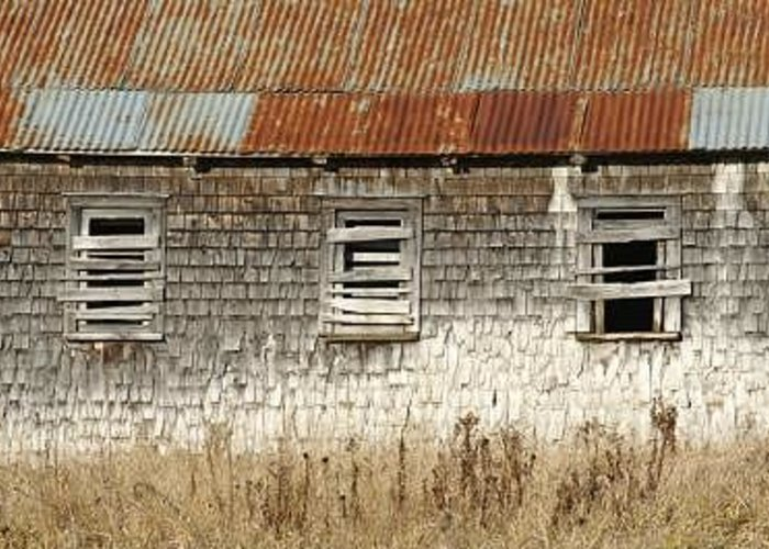 Three Boarded Barn Windows On Metal Roofed Barn Greeting Card featuring the photograph The Trio by Bill Morgenstern