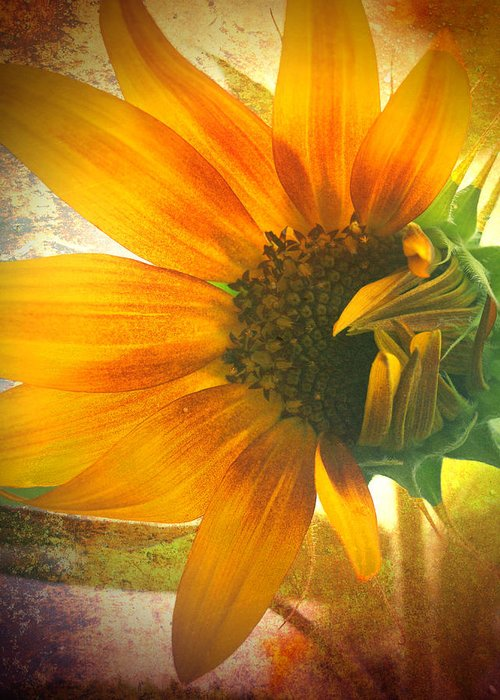 Sunflower Greeting Card featuring the photograph The Truth-teller by Tara Turner