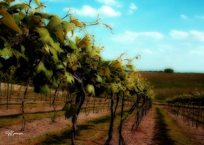 Silver Hills Winery Greeting Cards