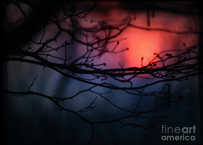 Sunset Greeting Card featuring the photograph The Warm Light by Angel Ciesniarska
