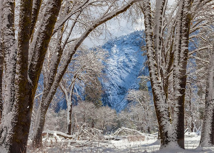 Landscape Greeting Card featuring the photograph The White Forest by Jonathan Nguyen