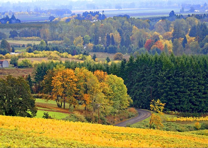 Willamette Valley Greeting Card featuring the photograph The Willamette Valley by Margaret Hood