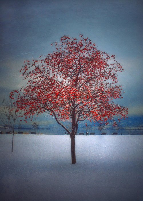 Tree Greeting Card featuring the photograph The Winter Berries by Tara Turner