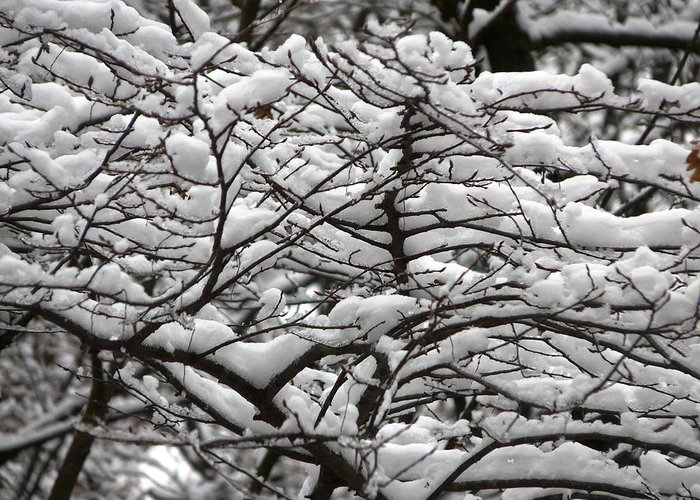 Winter Greeting Card featuring the photograph The Winter Has Arrived by Valerie Ornstein