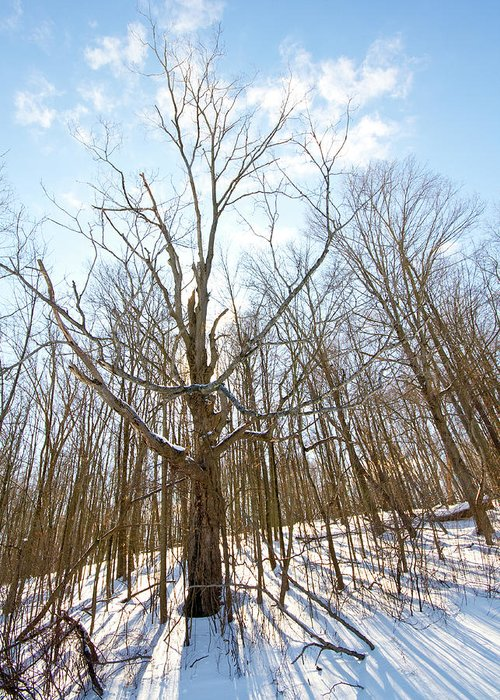 Bath Nature Preserve Greeting Card featuring the photograph The Winter Woods by Tim Fitzwater