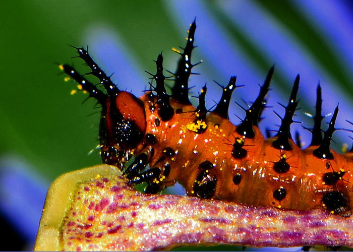 Caterpillar Greeting Card featuring the photograph They Call Me Spike 003 by George Bostian