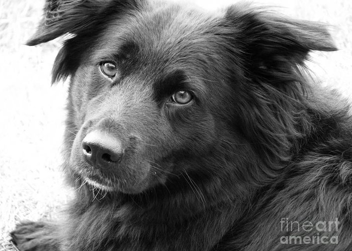 Dog Greeting Card featuring the photograph Thinking by Amanda Barcon