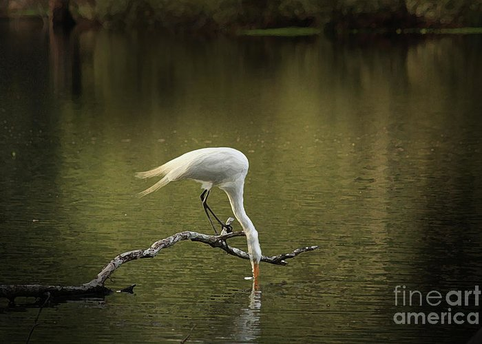 Heron Photographs Greeting Card featuring the photograph Thirst by Kim Henderson
