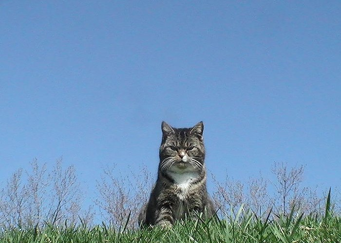 Cat Takes The High Road Greeting Card featuring the photograph This Is My Happy Face by Pat Nalls