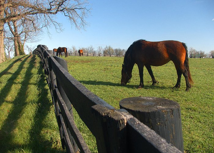 Horse Greeting Card featuring the photograph Thoroughbred Horses In Kentucky Pasture by Dave Chafin